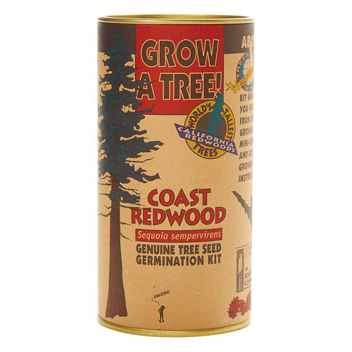 Coast Redwood Grow A Tree Kit