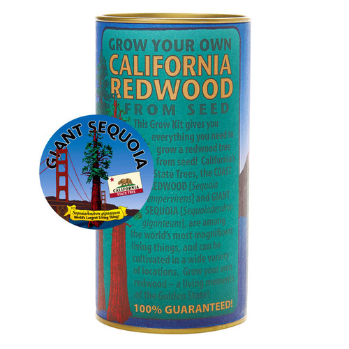California Redwood Giant Sequoia Grow A Tree Kit
