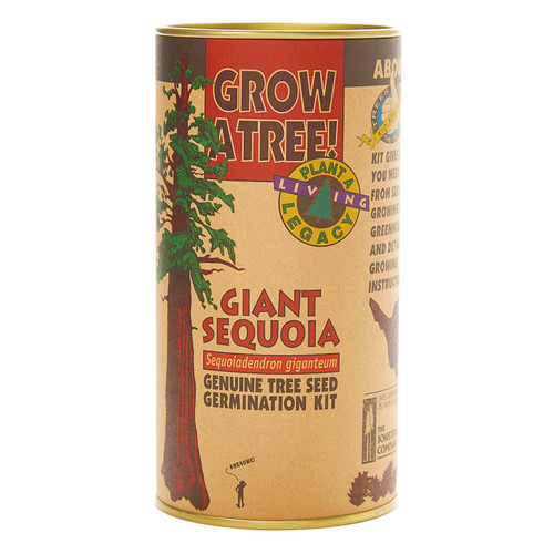 Giant Sequoia Grow A Tree Kit