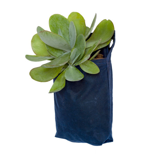 Grow Pack in Waxed Canvas Navy