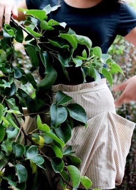 Forager Apron - Natural Linen