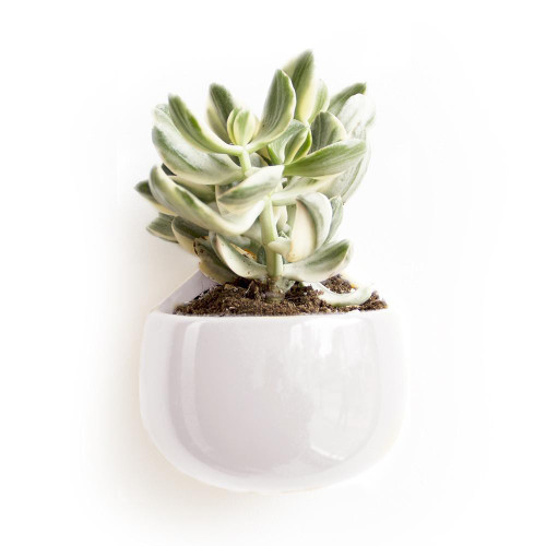 Nest Wall Mounted Plant Holder in White