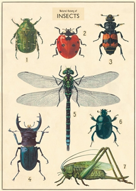 """Insect Wrap Sheet 20"""" x 28"""""""