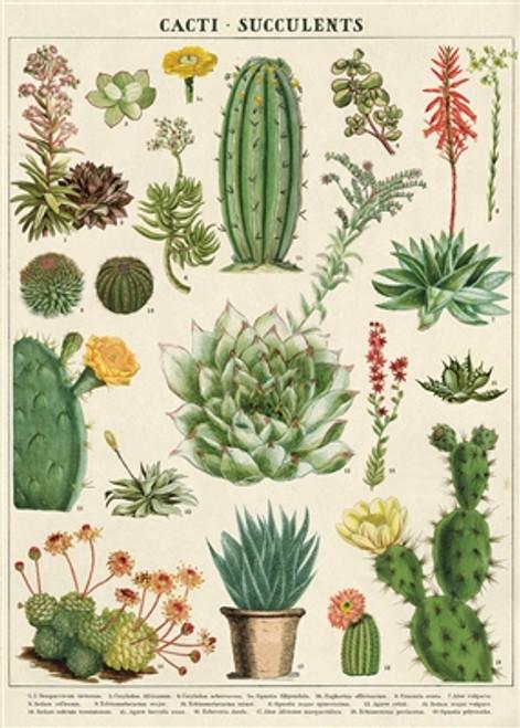 "Cacti & Succulents Wrap Sheet 20"" x 28"""