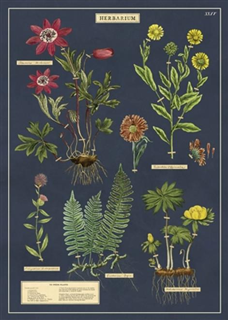 "Herbarium Wrap Sheet 20"" x 28"""