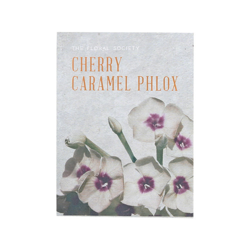 Cherry Caramel Phlox