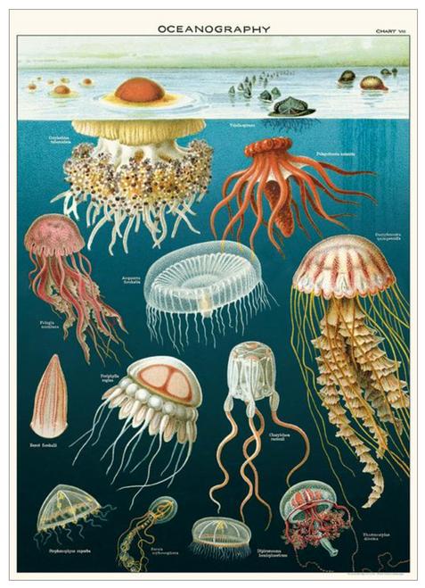 "Oceanography Wrap Sheet 20"" x 28"""