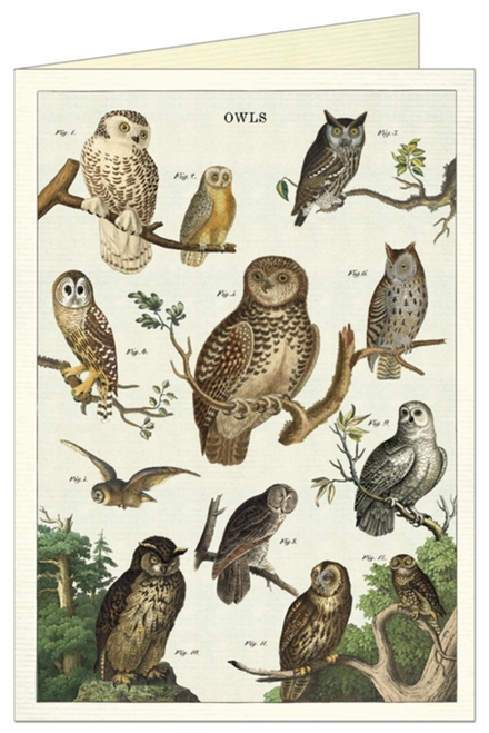 Owl Chart Greeting Card