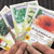 Fruition Seeds - Organic Seed for the Northeast (individual seed packs in assorted varieties)