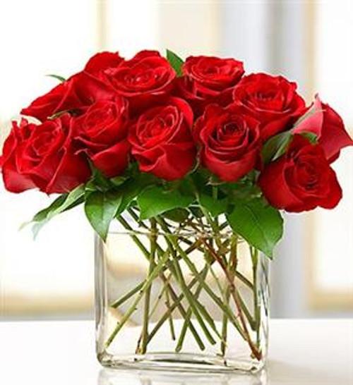Red One Dozen Modern Roses