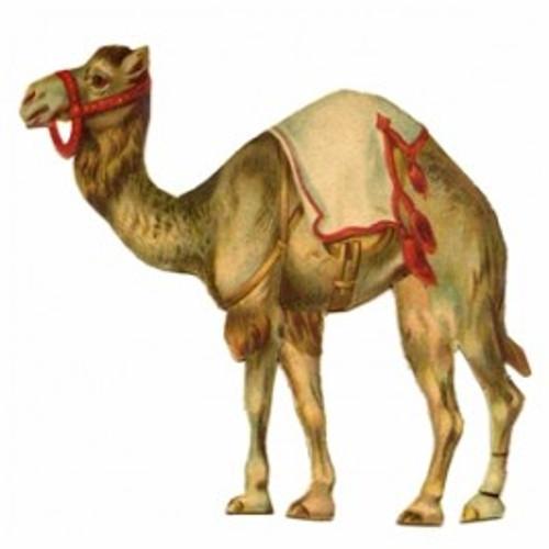 Camel Type Tobacco