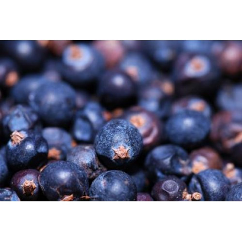 Huckleberry Eliquid | Wholesale | Vape Junkie Ejuice - Huckleberry is related to the blueberry, yet with its own wonderful flavor.