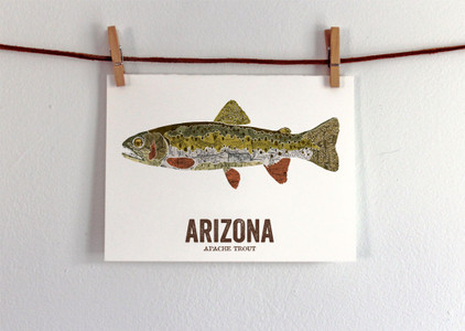 Arizona State Fish - ApacheTrout