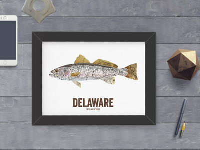 Delaware State Fish, Map art- Weakfish