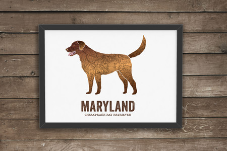 Maryland State Dog art - Chesapeake Bay Retriever
