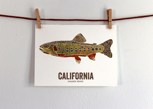 California State Fish Art- Golden Trout