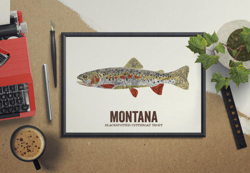 Montana State Fish - Blackspotted Cutthroat Trout