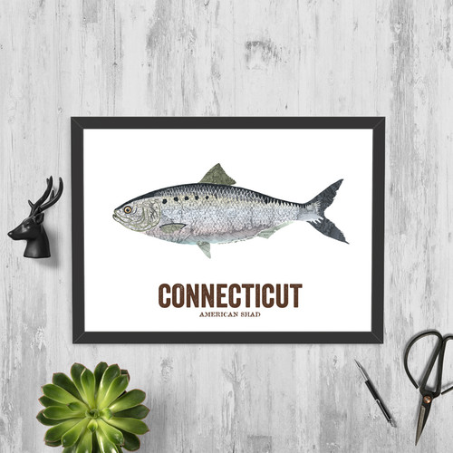 Connecticut State Fish, Map art - American Shad
