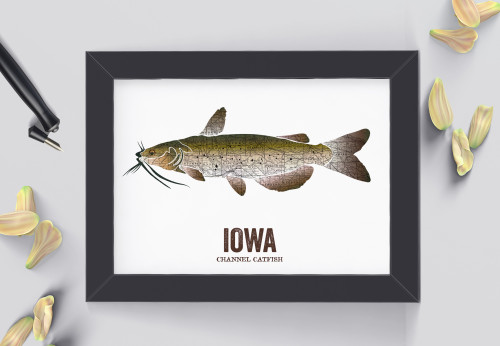 Iowa State Fish, Map art- Channel Catfish