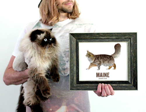 Maine State Cat print,  Map prints - Maine Coon