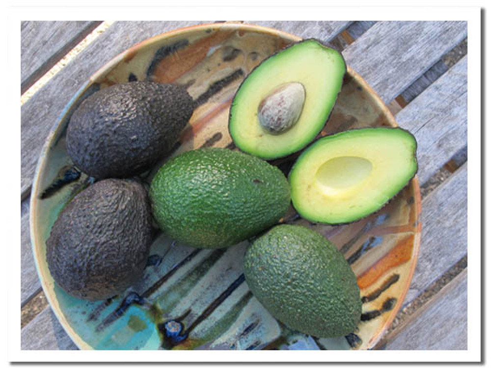 Our certified organic Hass avocados - grove direct.