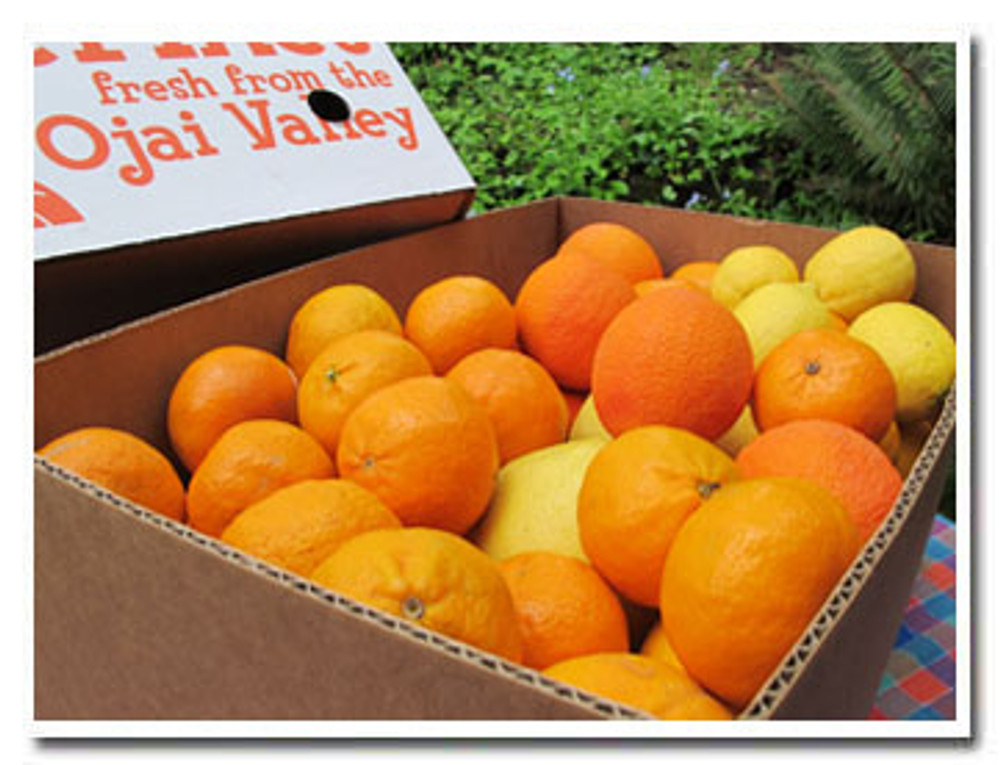 Spring Fling  - it's a big box of juicy spring citrus. And all of it holds beautifully without refrigeration.