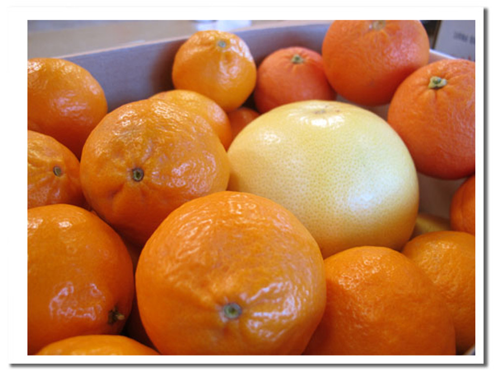 Little Spring Fling  - it's a nice box of juicy spring citrus. And all of it holds beautifully without refrigeration.