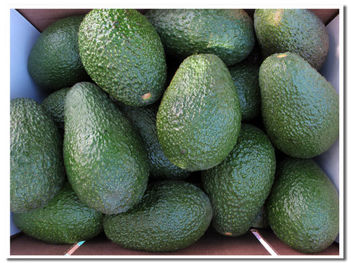 Here's a closeup of our Hass avocados- picked fresh when we ship to you. That's why they're green.
