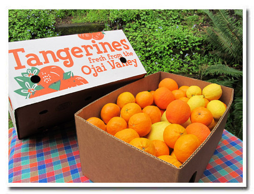 The Spring Fling Party Box: 8 lbs of Pixie tangerines plus 12 Oro Blancos. Just for fun, we're throwing a few Vanilla Blood Oranges and our own fresh lemons. It's a lovely spring treat.