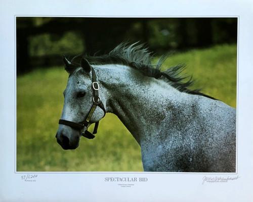 Spectacular Bid photograph by James Archambeau