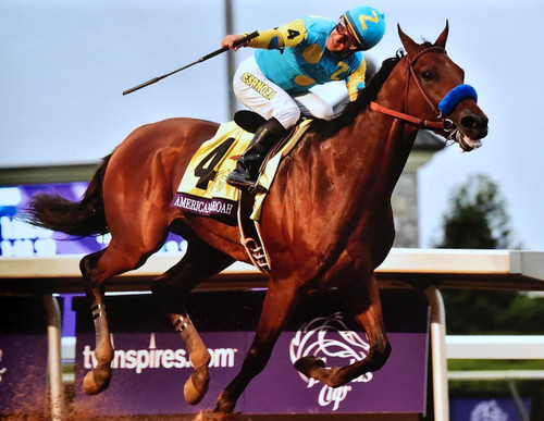 American Pharoah 2015 Triple Crown Winner Breeders Cup Keeneland Race Course Lexington, Kentucky