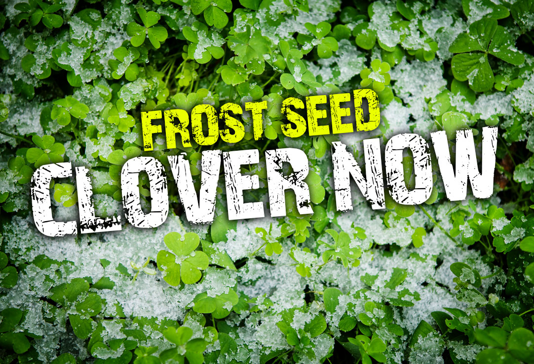 Frost seed clover now from frigid forage