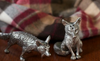 Fox Salt and Pepper Set