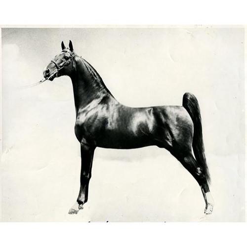 Black and White Horse on Metallic Plexi