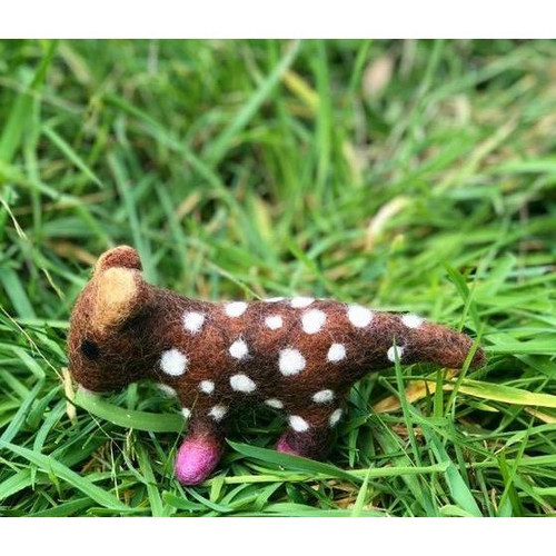a single felt quoll in the grass