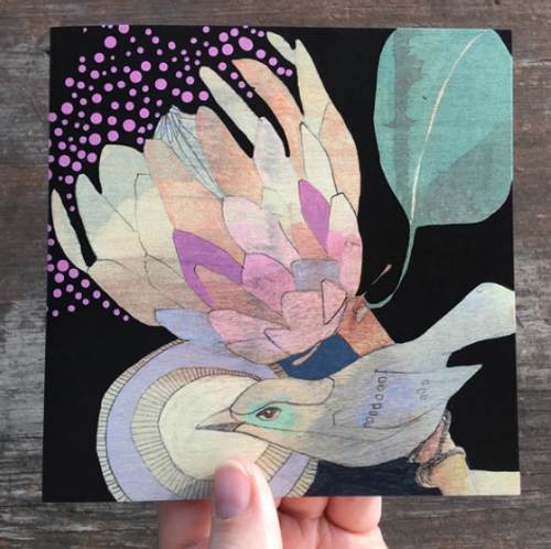 spotted pardalote and protea card