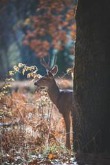 How to hunt the October Lull | THLETE Whitetail Deer Hunting