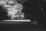 How well do deer see: night | THLETE Whitetail Deer Hunting