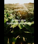 8 Summer Scouting Tips | THLETE Whitetail Deer Hunting
