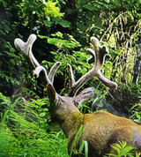 When to hunt bedding areas | THLETE Whitetail Deer Hunting