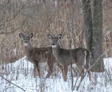 Rut Watch: The Pre-Rut | THLETE Whitetail Deer Hunting