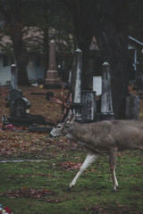 8 Tips to Kill Big Suburban Backyard Bucks – Hunting Metro Whitetail Deer
