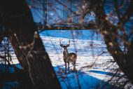 Pushing Through Lockdown | THLETE Whitetail Deer Hunting