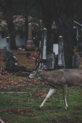 8 Tips to Kill Urban Bucks | THLETE Whitetail Deer Hunting