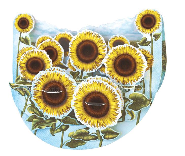 Popnrock - Sunflower Field