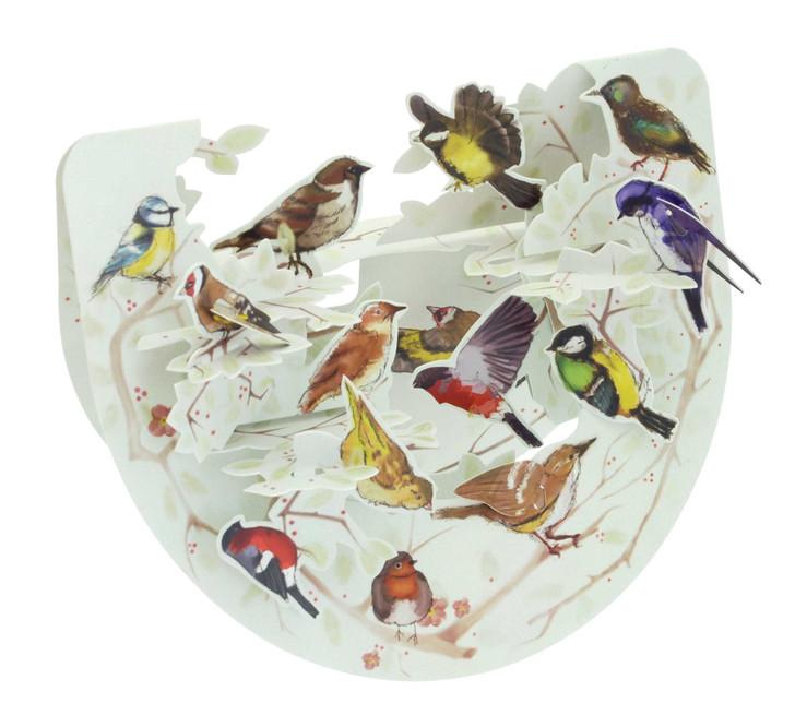 Popnrock - Garden Birds