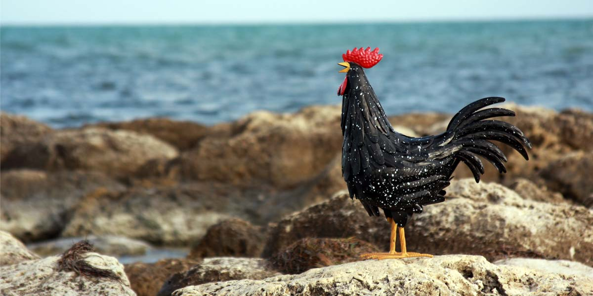 1e241a70b Funky Chicken Store