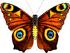 "New Tech kites- Silk Butterfly ""Tiger's eye"""