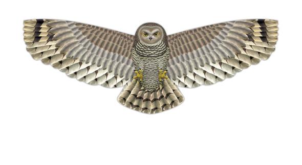 "WindnSun kites - SuperSize ""Owl"""