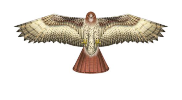 "WindnSun kites - SuperSize ""Hawk"""